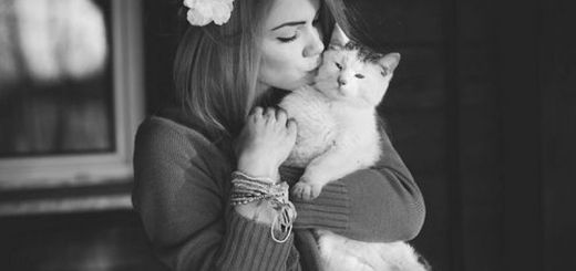 cat_New_Love_Times