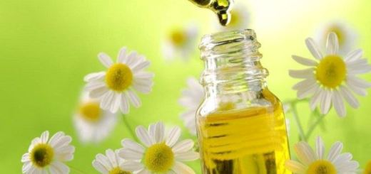 chamomile essential oil_New_Love_Times