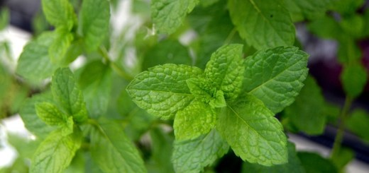 mint face mask recipes_New_Love_Times