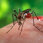 16740-close-up-of-a-mosquito-feeding-on-blood-pv