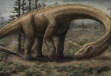 dreadnoughtus discovered in Argentina