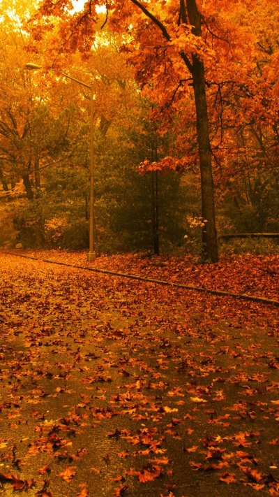 28 Breath-Taking and Most Beautiful Fall Wallpaper for Your iPhone | News Share