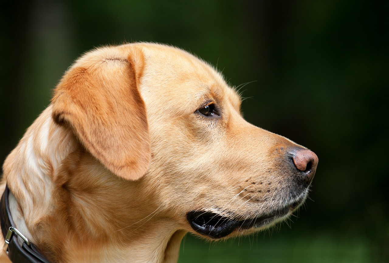 Serene A Not Bad Joke Dog Image Bad Pun Dog Joke Face A Not Face bark post Bad Joke Dog