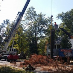 Newton Tree Service is fully equipped to handle your largest tree needs.