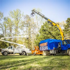 Newton Tree Service is fully equipped to handle all tree needs.