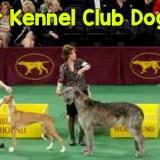 New York Westminster Dog Show