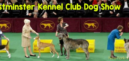 New York Westminster Dog Show