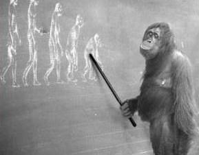 evolucion-y-conducta