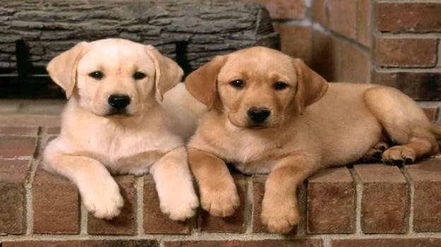 medium dog breeds