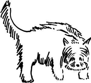 5 dog
