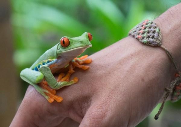 co11noviceemma-beattyhowellsa_frog_on_the_hand32