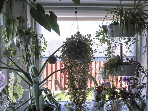 blinds, kitchen