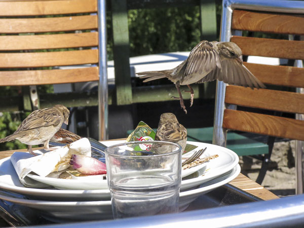 birds, millesgården