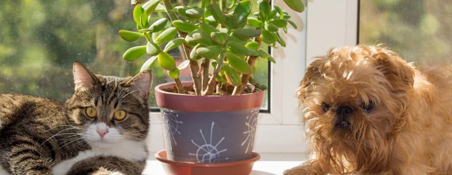 Non toxic pet safe plants for indoor apartment living myideasbedroom