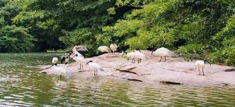 Tourist Places to visit in kalady - Thattekad Bird Sanctuary