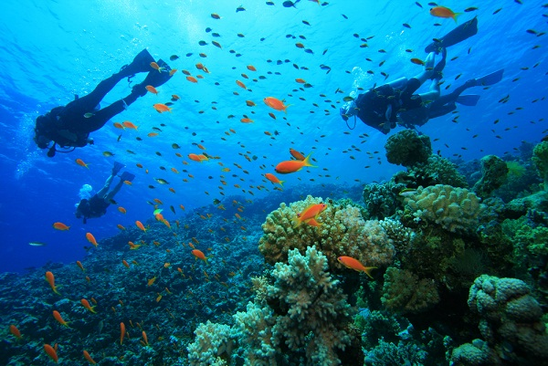 Scuba diving in goa - goa scuba diving sites