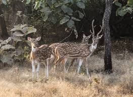 Gir National Park, Gir Forest National Park