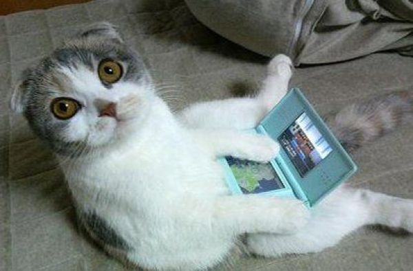 animals-playing-video-games