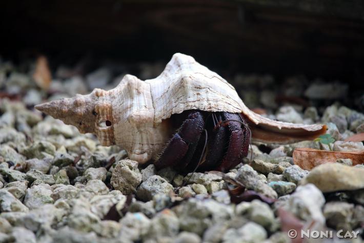 IMG_3473Hermit Crab