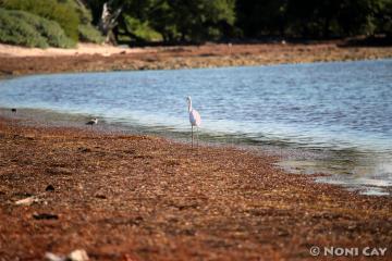 IMG_4241Seagrass Beach