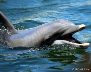 IMG_4410dolphin