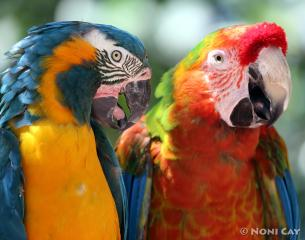 IMG_4627parrots Parrots