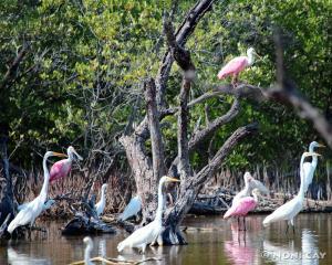 IMG_0650WaterBirds Water Birds