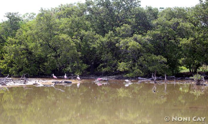 IMG_9833Sponbills at the Marsh