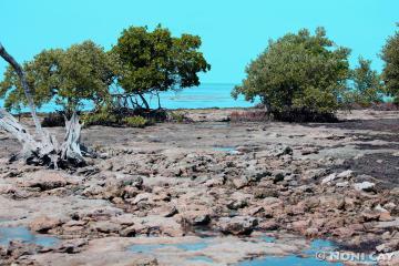 IMG_9984SeaGrass Beach