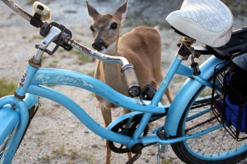 IMG_1658.Bicycle