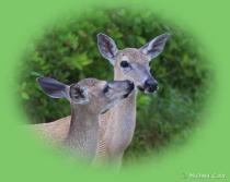 DeerFriends