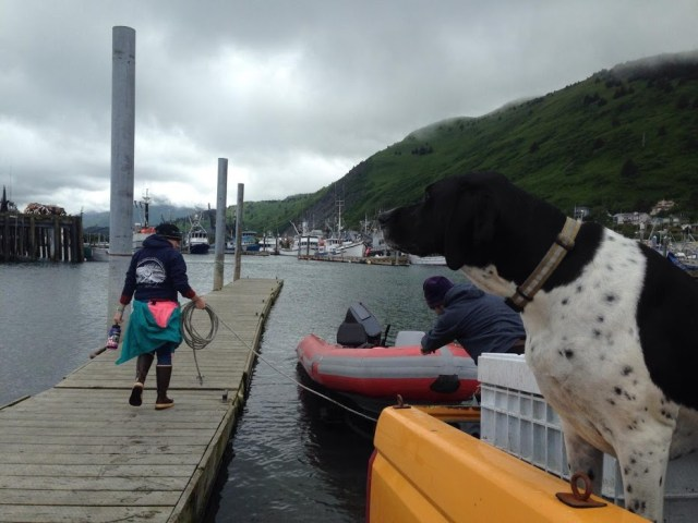 Kat O'Brien walks to her research vessel while a dog looks on with the bay in the background.
