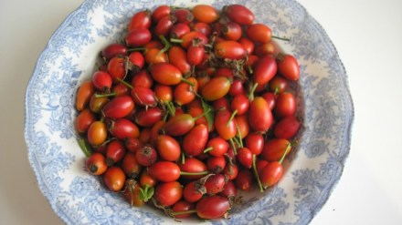 Rosehips in a bowl