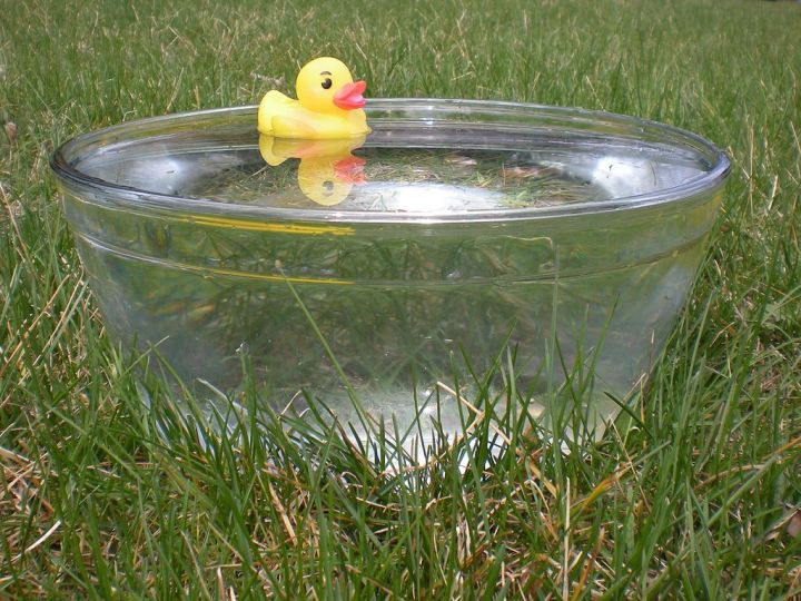 橡胶_duck_in_glass_bowl.