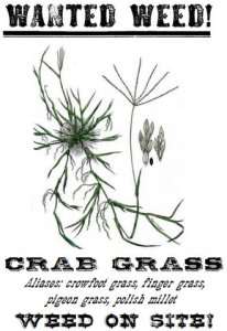 crabgrass wanted poster