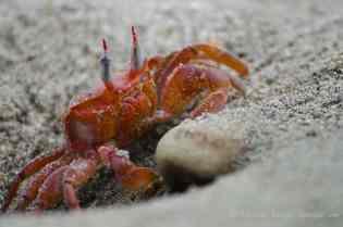 Crabs were everywhere!