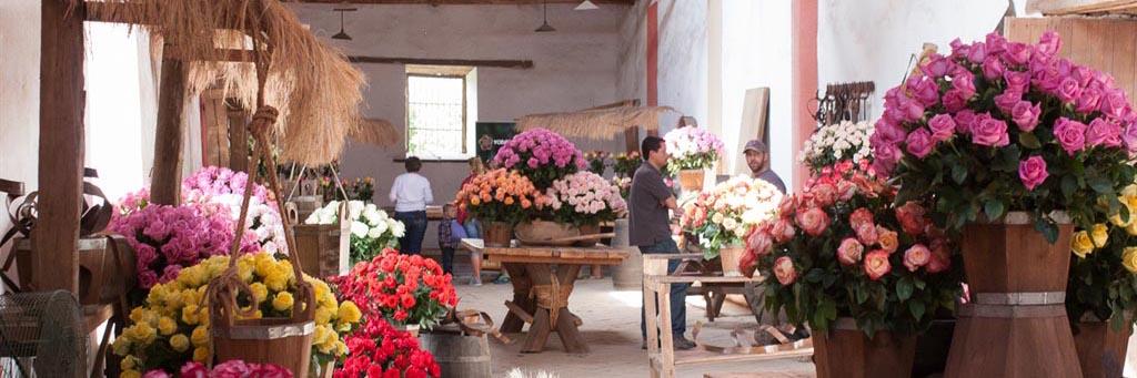 Workshop at the Rose Hacienda