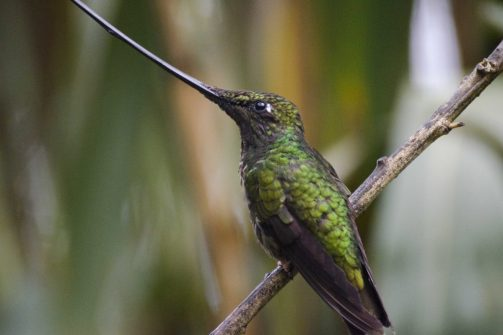 Pichincha Province, Yanacocha Reserve