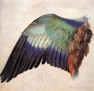 Albrecht_Durer,_Wing_of_a_Roller,_1512