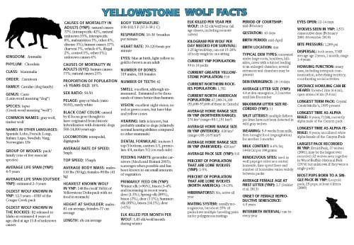 Medium Of Male Wolf Names