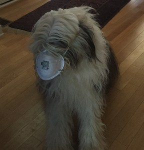 My pup didn't tolerate the mask very long.