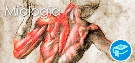 Apunts-Anatomia-Miologia