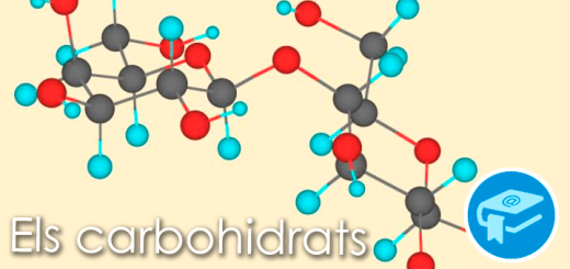 Apunts-ElsCarbohidratsd