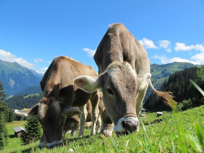 organic milk meat