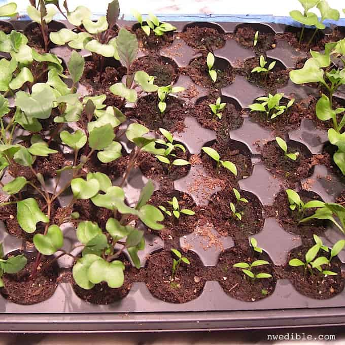 Seed Starting 101-6