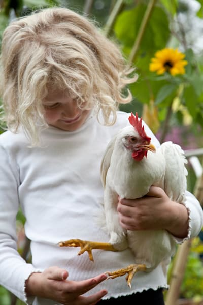 Erica Strauss 's daughter Bella, 7, loves having chickens.