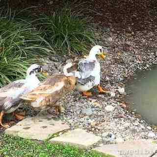 """""""Welcome to my pond, ladies."""""""