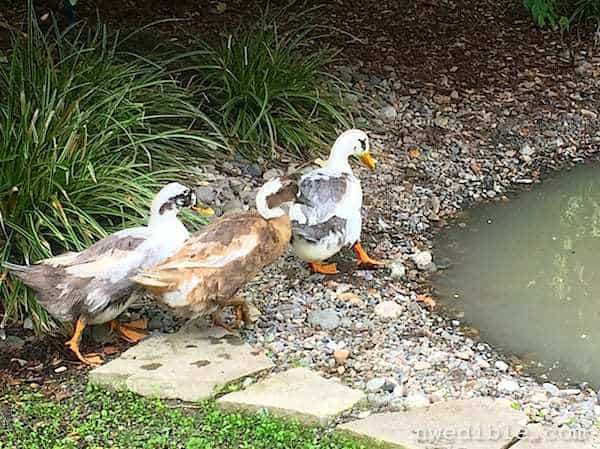 Can You Seal A Pond With Clay Kitty Litter? Part 2