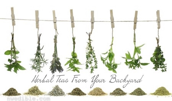 DIY Herbal Teas (The Giant Tutorial)