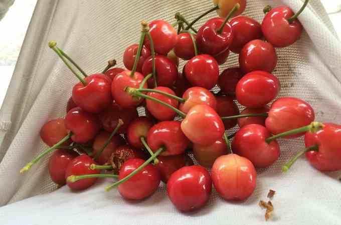 Cherries for us....